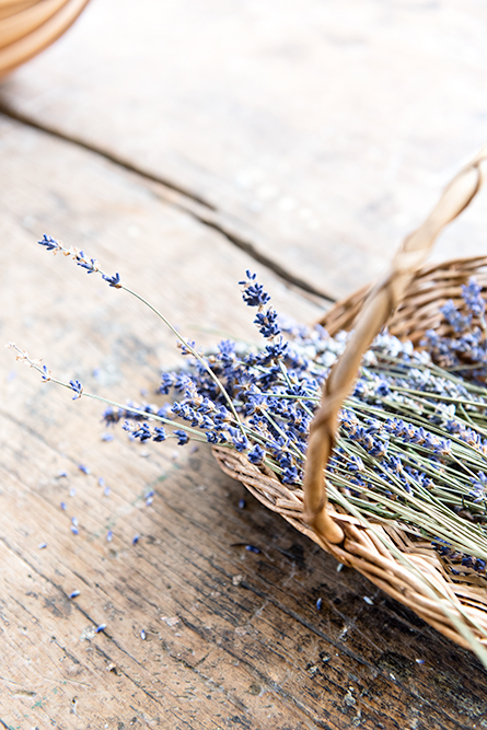 Lavender in the kitchen at Osterley House, an 18th century mansion in London.