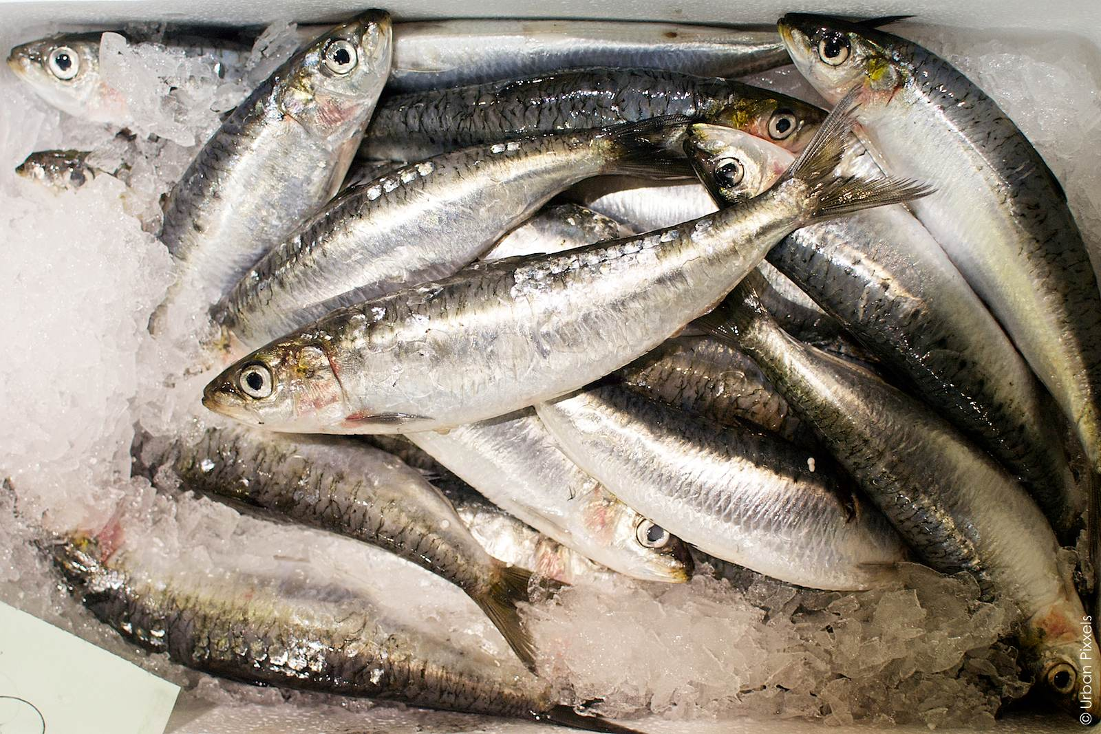 how to get the fish smell out of the refrigerator